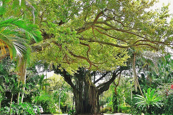 Garden of the Groves in Bahamas
