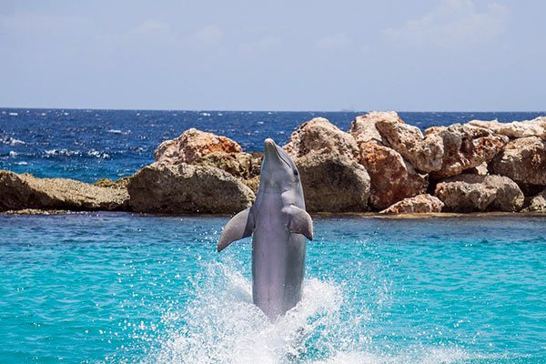 Dolphin in Mexican Riviera