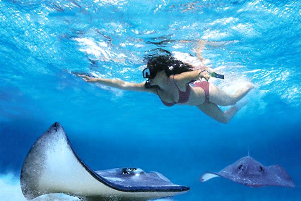 Royal Caribbean Cruises - Swim With Stingrays (Select Itineraries)